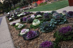Plants in the Epicurious Garden