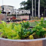 Epicurious Garden at Southbank