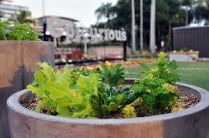Leafy Greens & Herbs at the Epicurious Garden